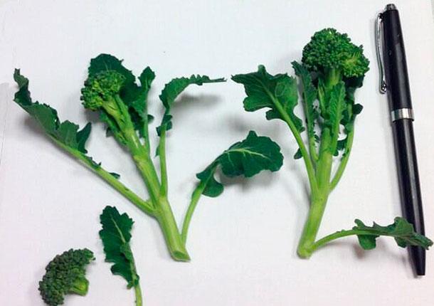 Mini brócolis